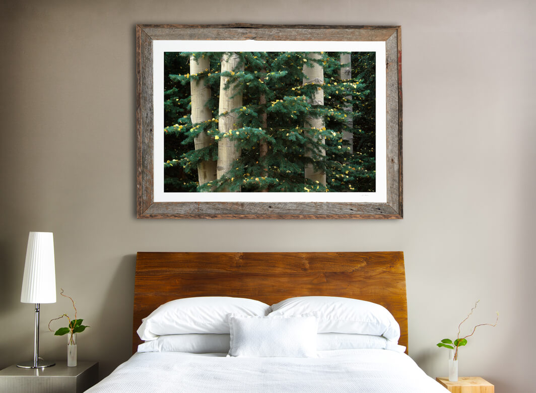Framed print of Aspen and White Fir hanging on Wall
