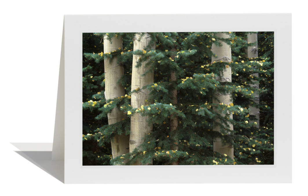 Aspen and Evergreen Card