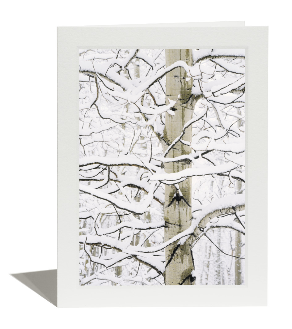 Aspen in Snow Card
