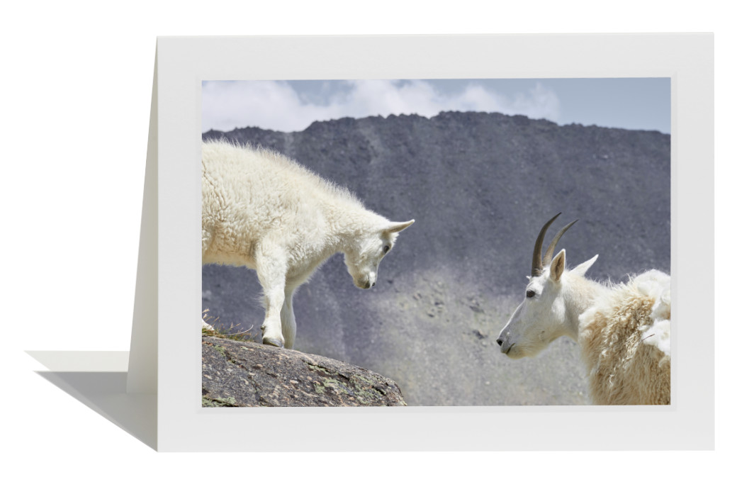 Mountain Goats Card